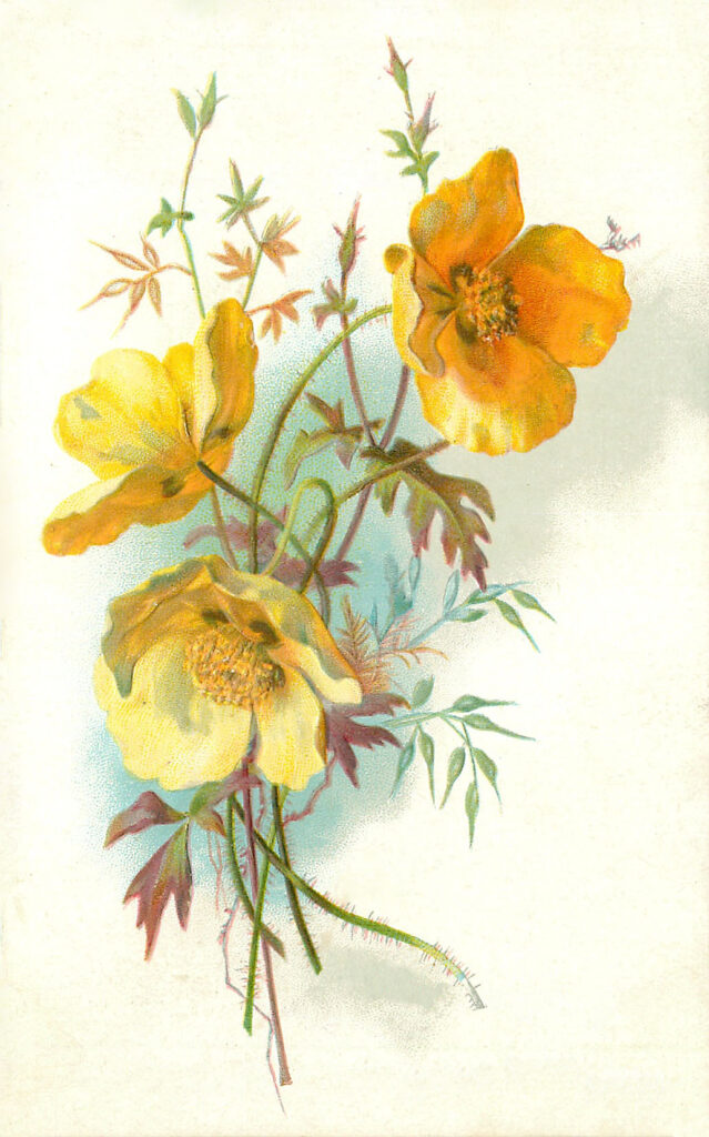 Yellow Poppies Picture