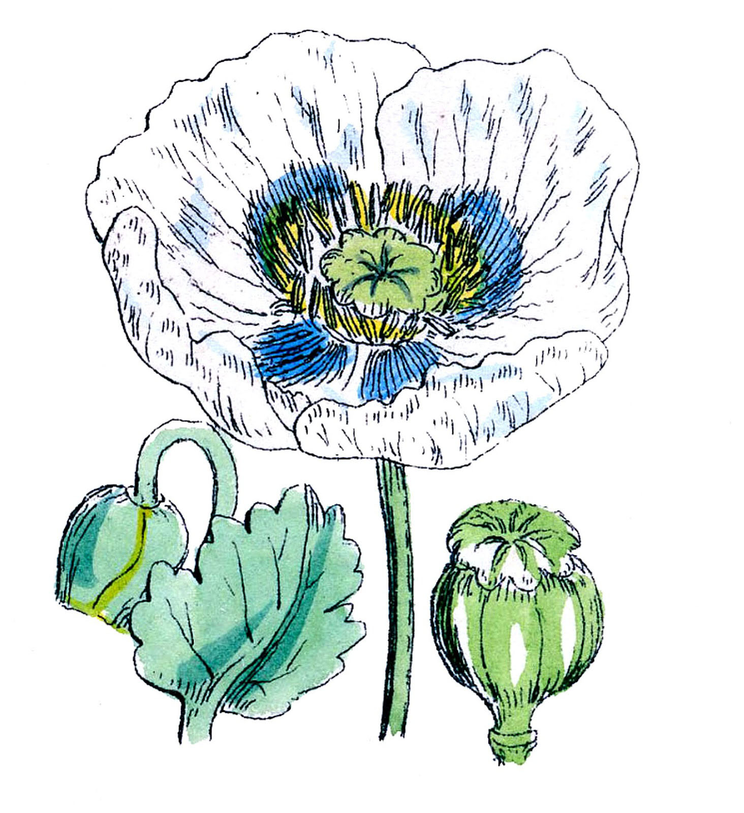 poppy-white-GraphicsFairy