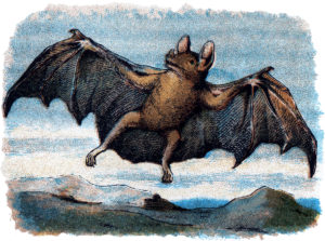 Bat Flying Illustration