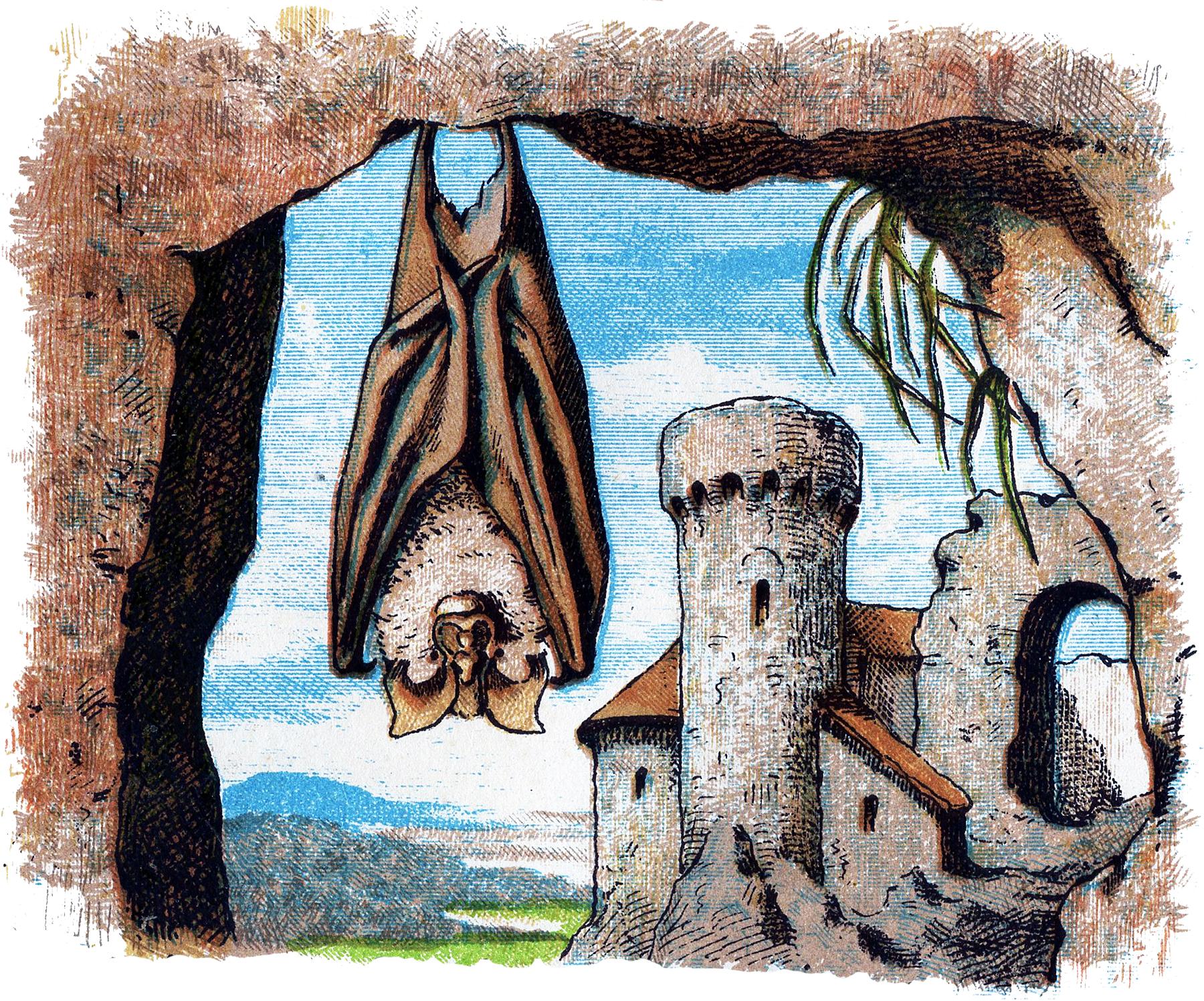 12 Bat Images - Vintage Halloween