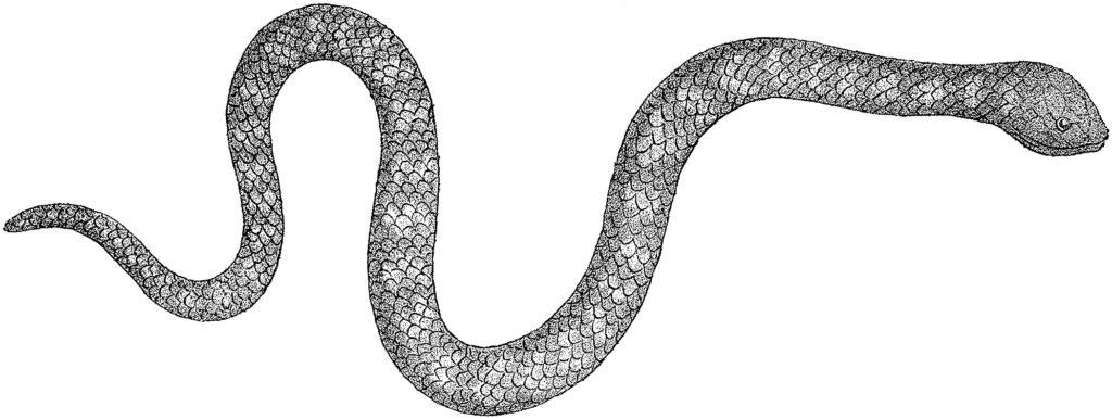 black white snake illustration