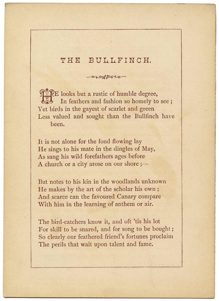 Ephemera Bird Poem Bullfinch