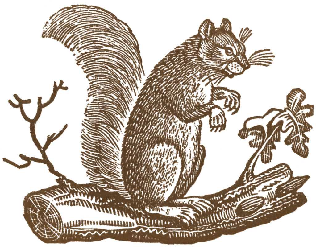 primitive squirrel clip art