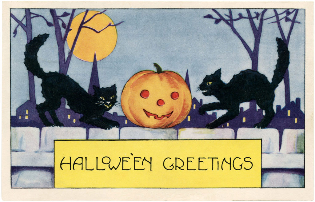 black cats pumpkin moon fence