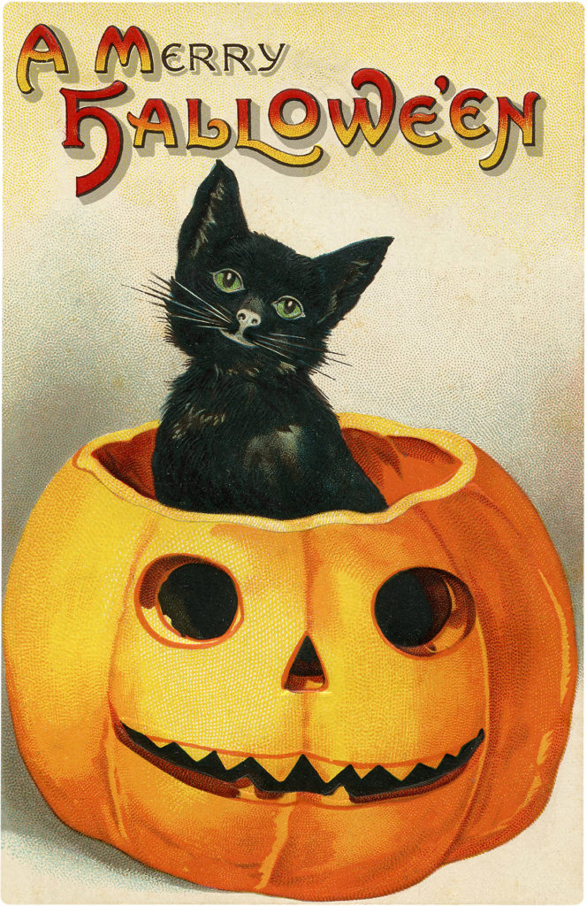 cute black cat pumpkin jack o'lantern halloween