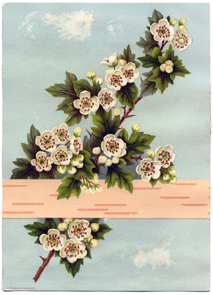 rose sprig birch illustration