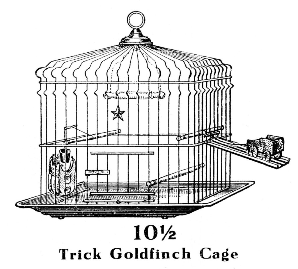 Goldfinch Bird Cage Image