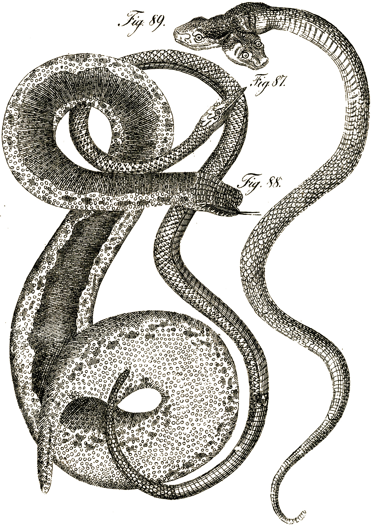 Two Headed Snake 8 Snake Images Halloween The