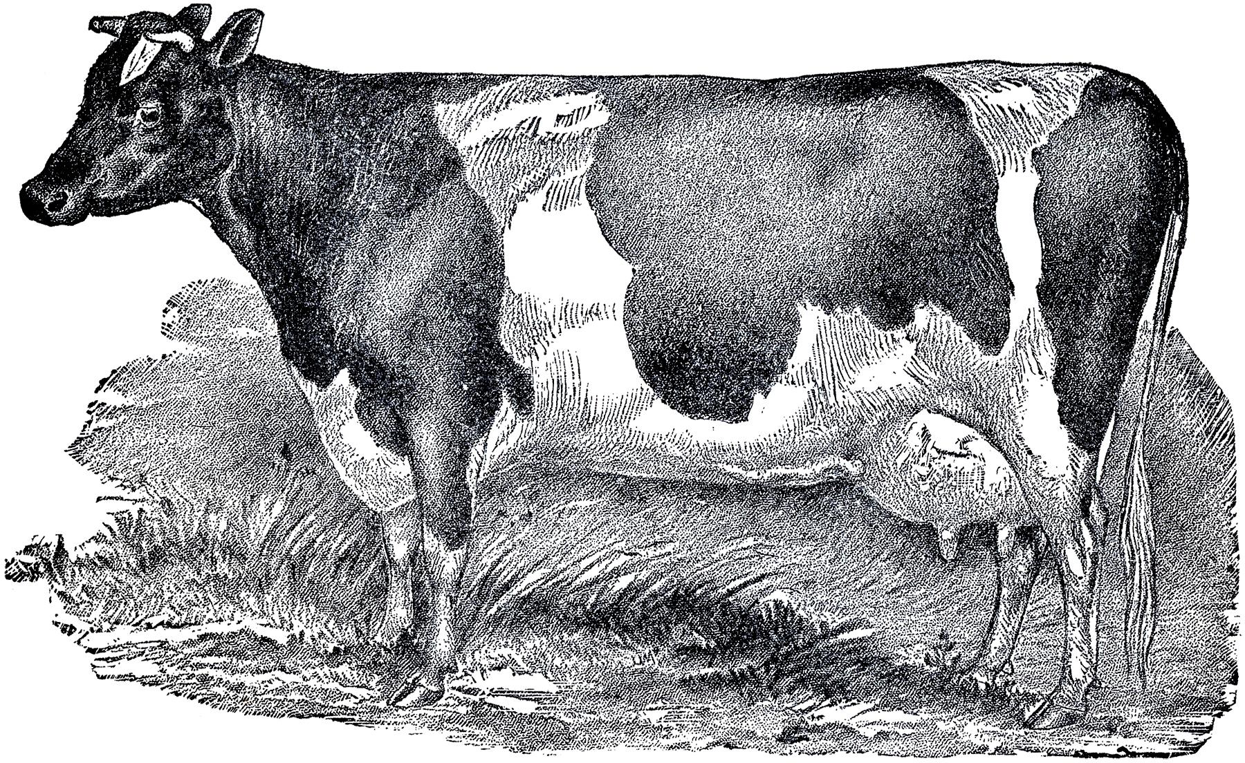 картинки для декупажа монохром корова бывшим