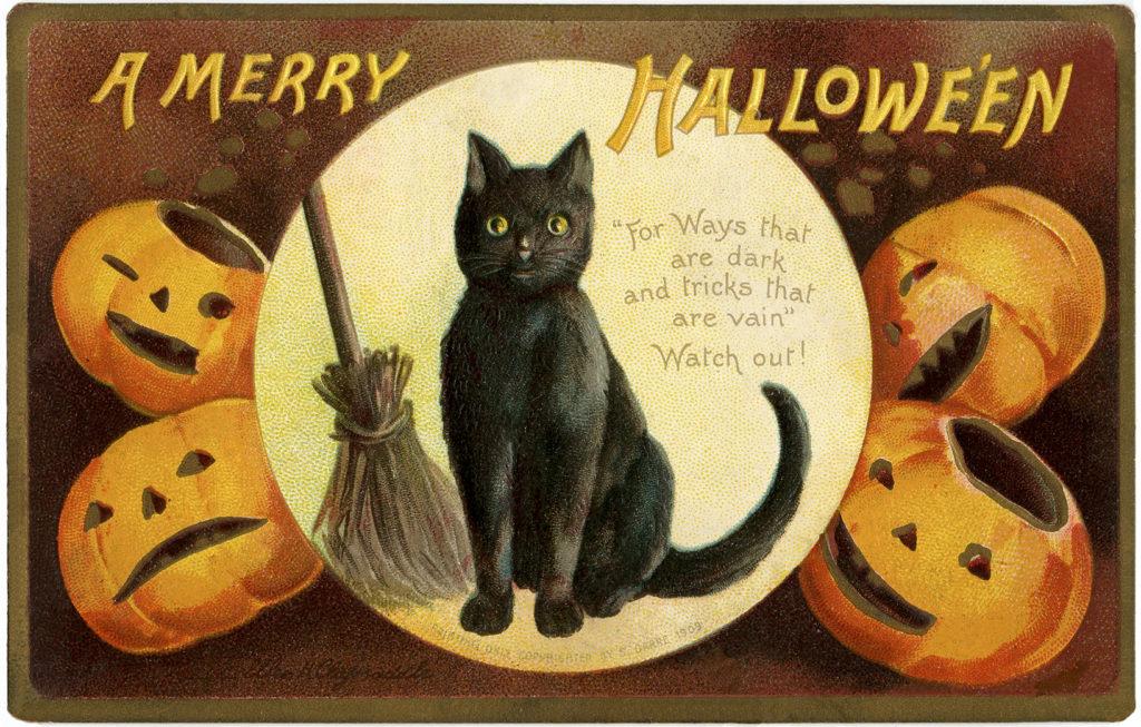 black cat broom jack-o-lantern halloween