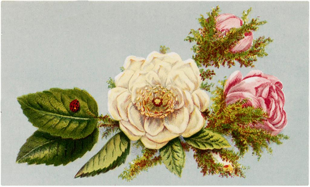 rose floral spray ladybug vintage image