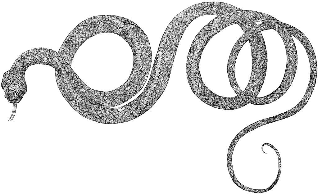 vintage snake clip art