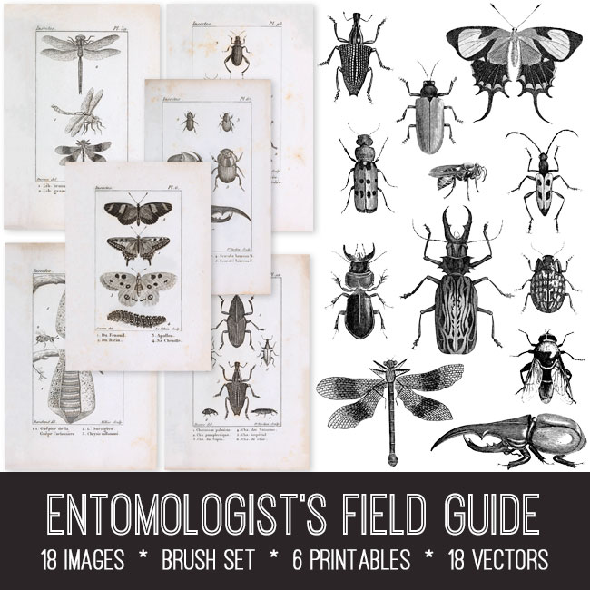 Entomologist's Field Guide Image Bundle Bugs