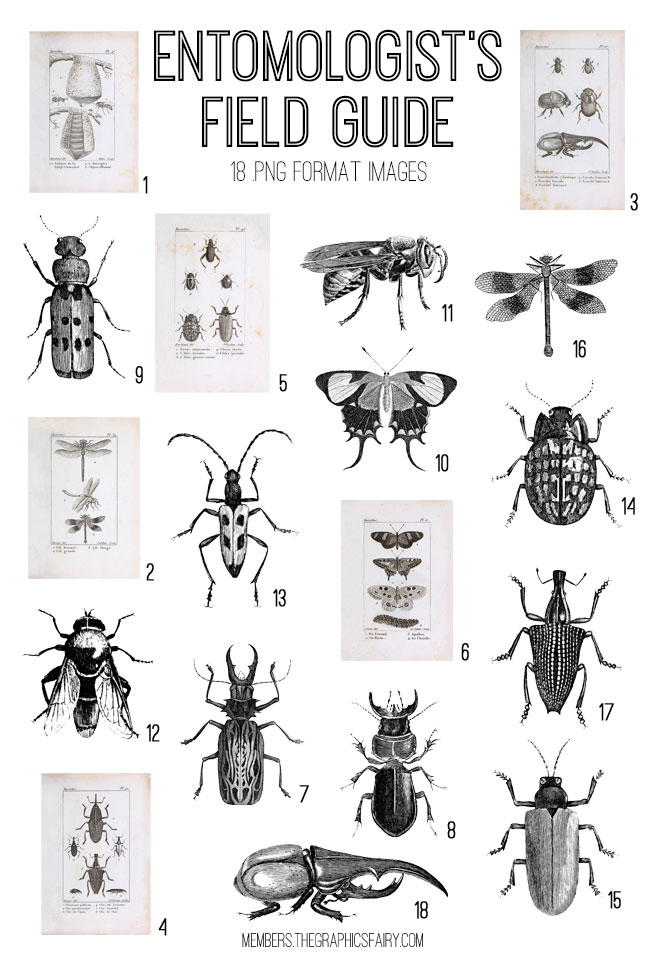 Vintage Insect Chart