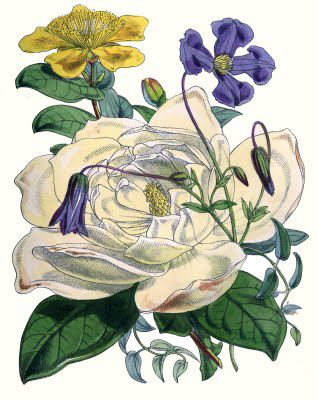 rose flower arrangement botanical image
