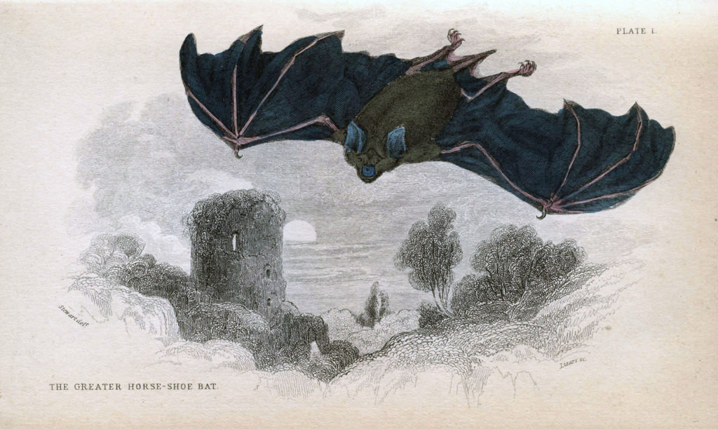 Flying Bat Illustration