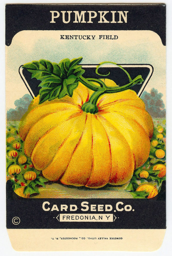 pumpkin seed packet field image