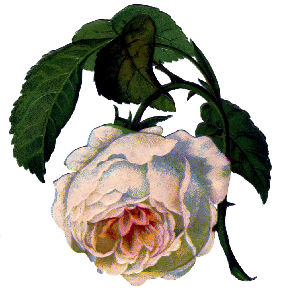 vintage wilting rose clipart