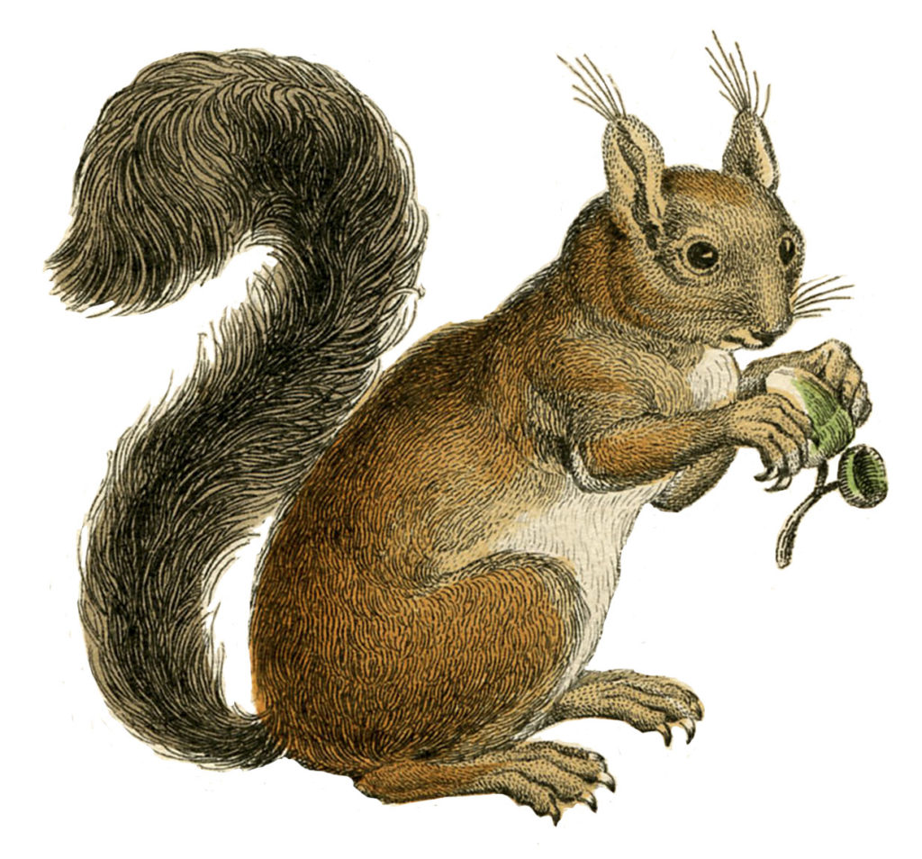 vintage brown squirrel image