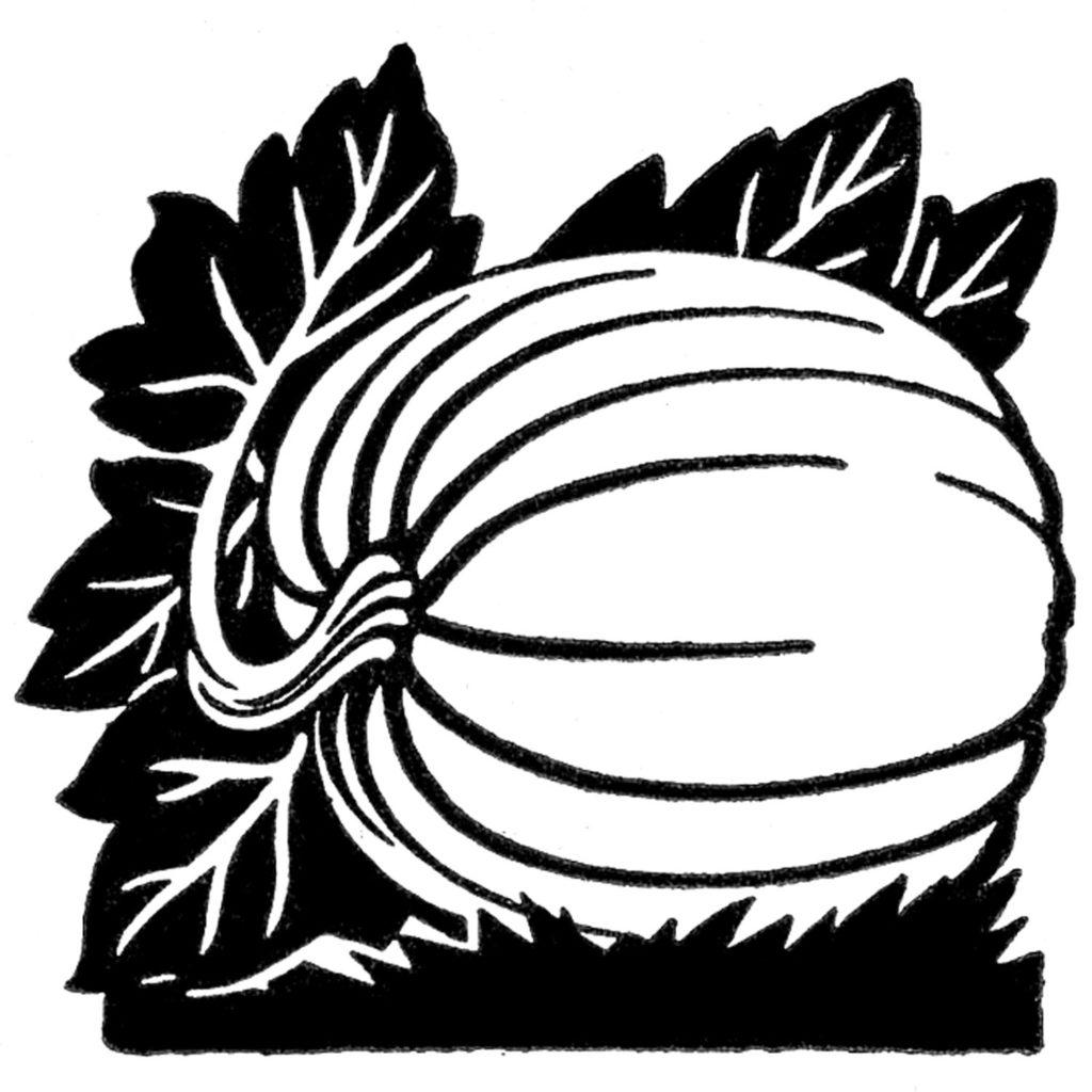 black white pumpkin clip art