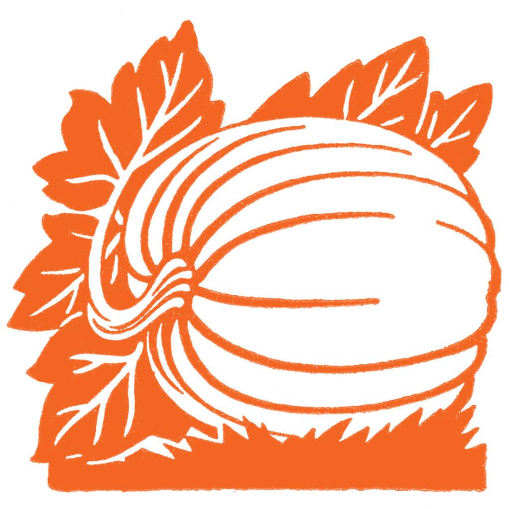 pumpkin vine orange clipart