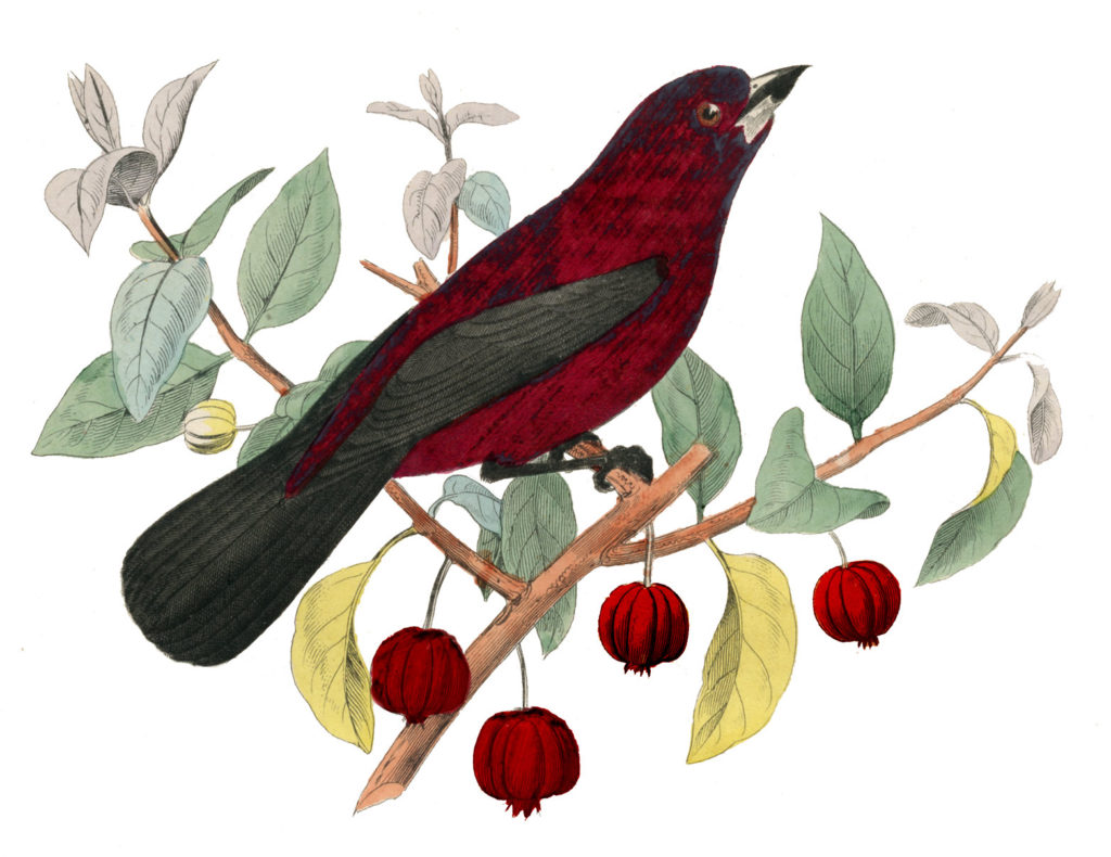 bird on red berry branch image