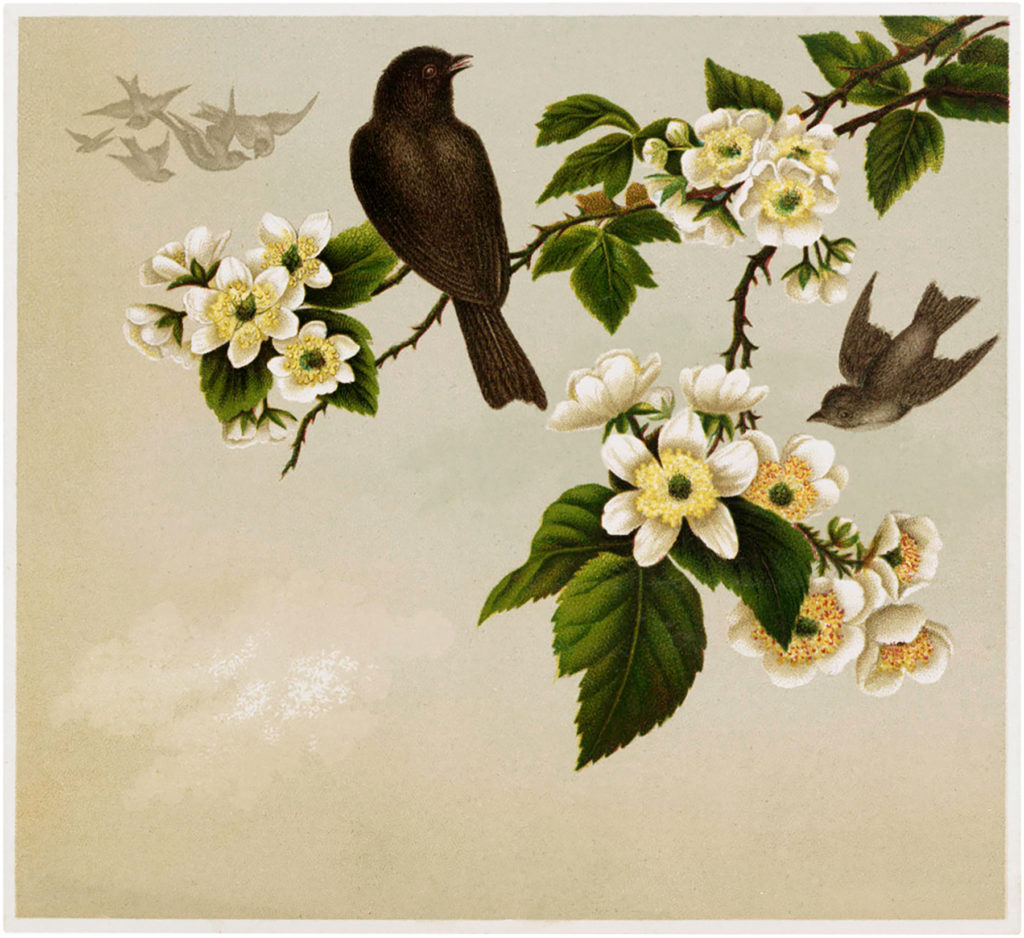 birds wild roses illustration