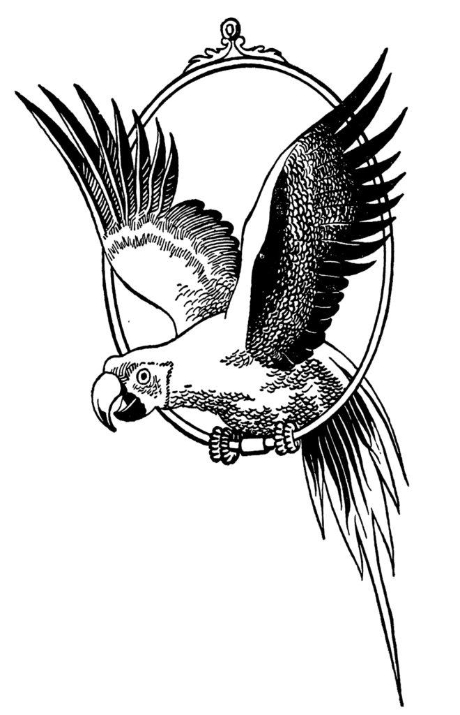 parrot black white image