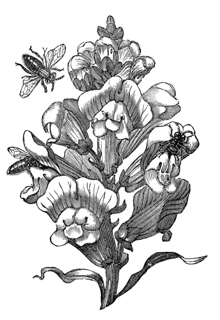 botanical bees flower illustration