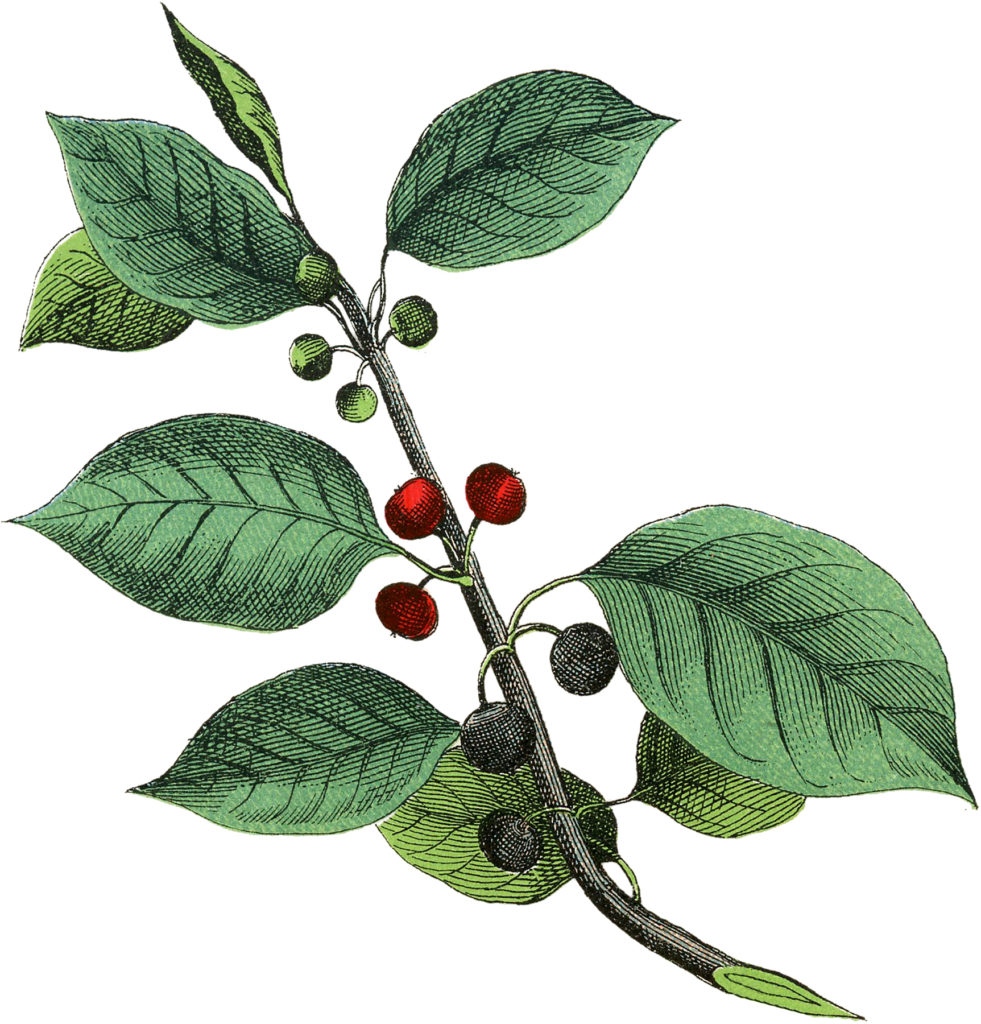 Botanical Branch with Berries Image