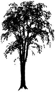 Elm Tree Silhouette