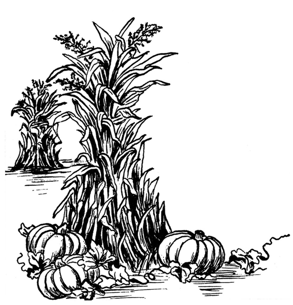fall harvest pumpkins corn stalks clipart