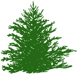 Green Fir Tree Clipart