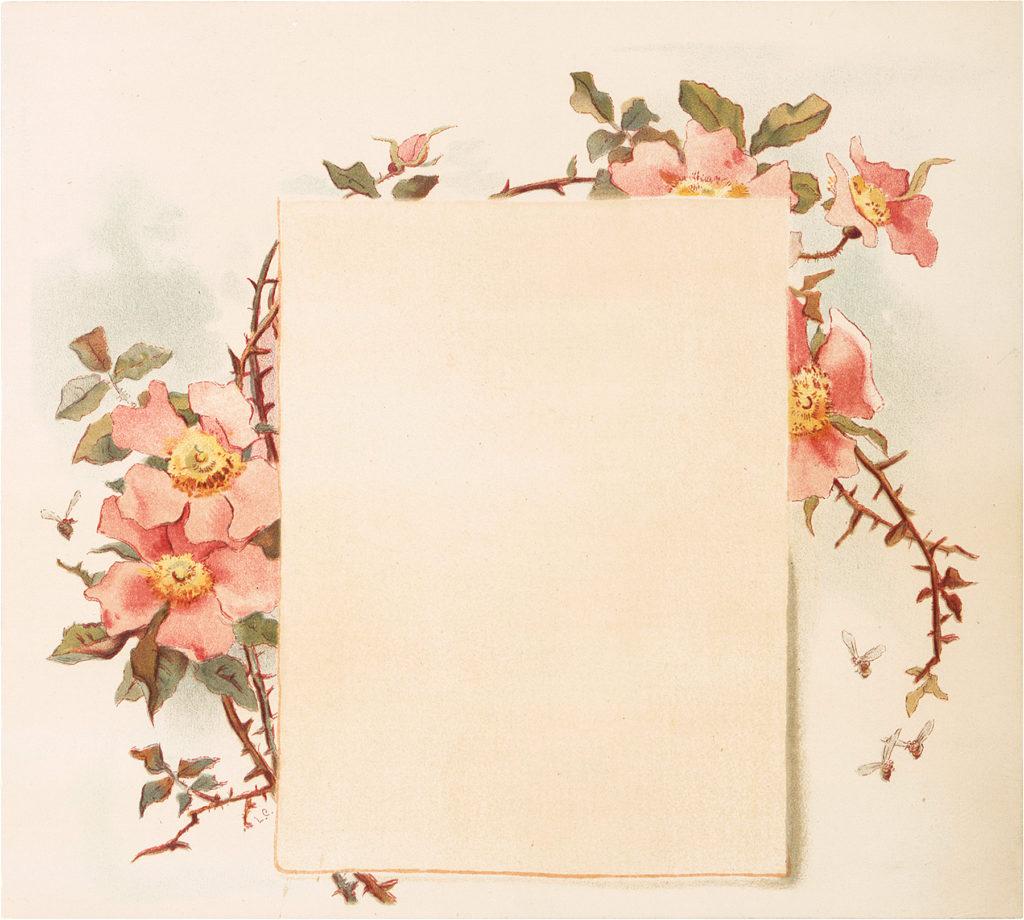 floral frame pink roses image