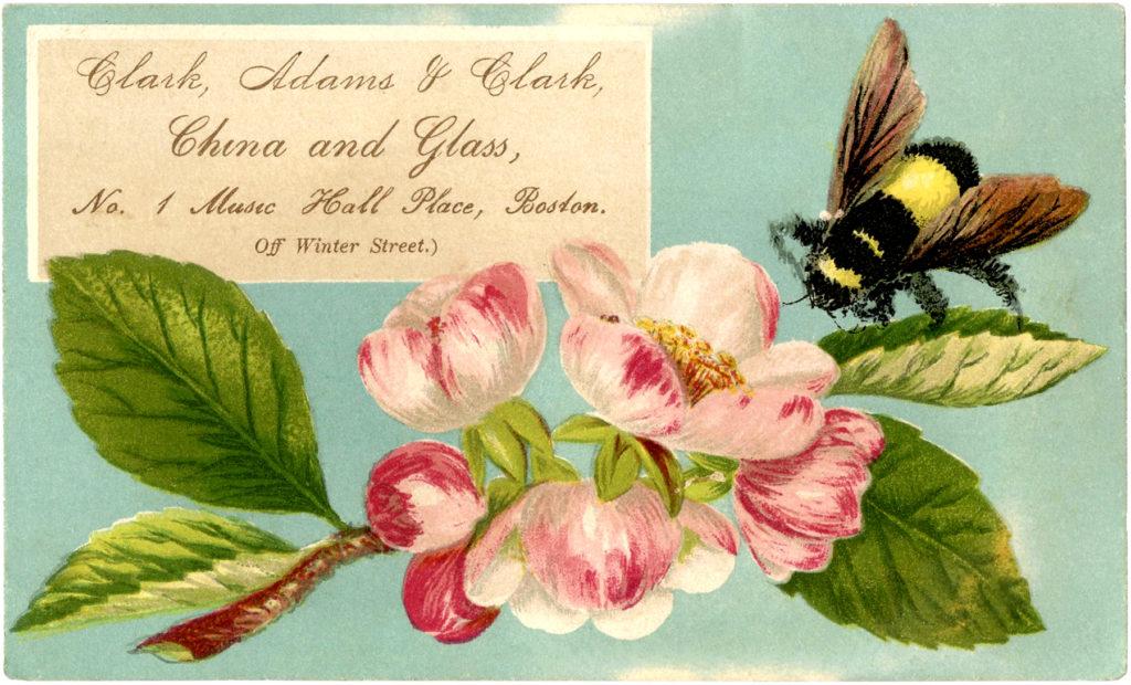 bee flower vintage image
