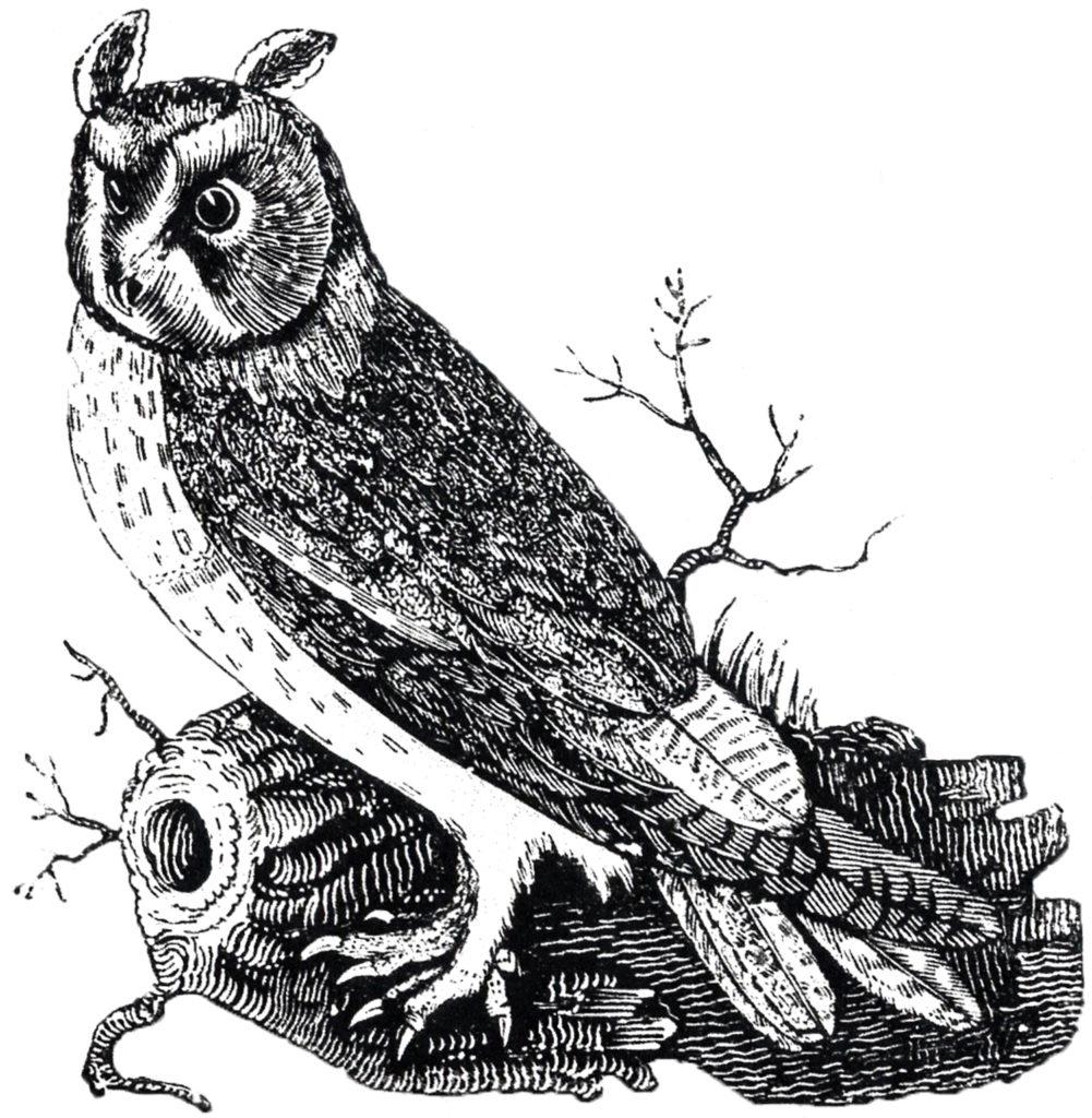 vintage owl image