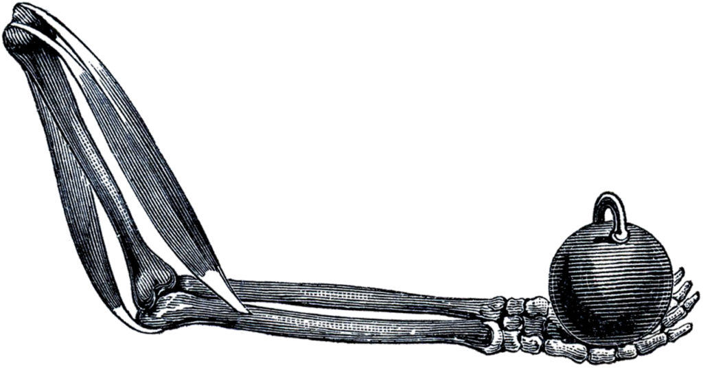 halloween skeleton arm image