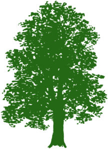 Green Maple Tree Clip Art
