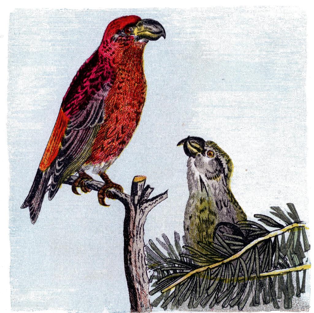 Natural History Parrots