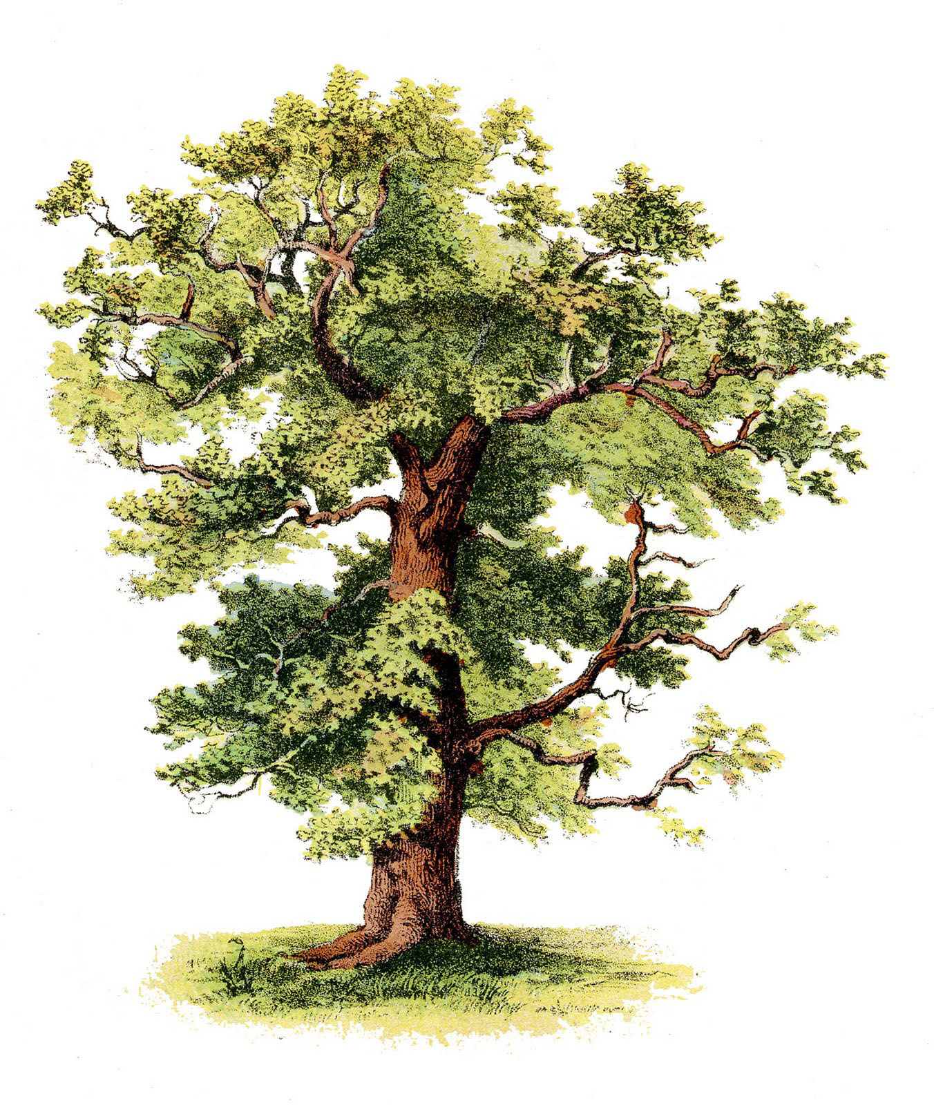 36 Tree Clipart Trees Images Free The Graphics Fairy