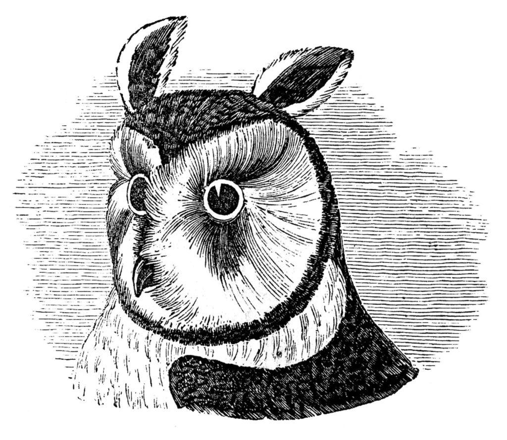 owl head vintage illustration