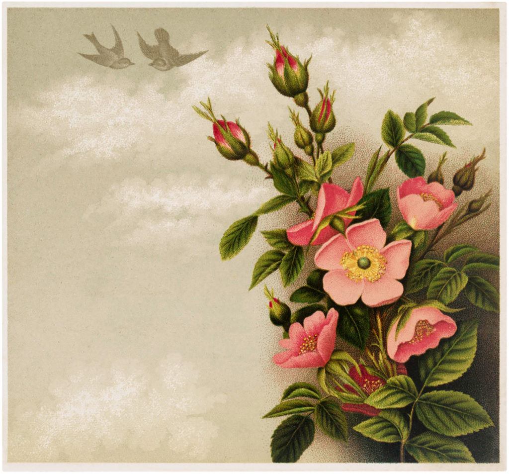 pink roses birds image