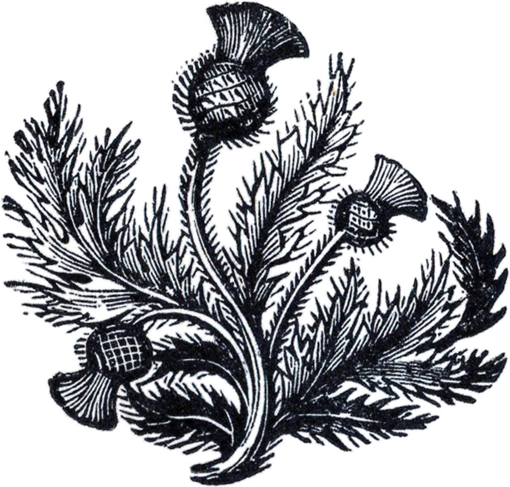 black white thistle clipart