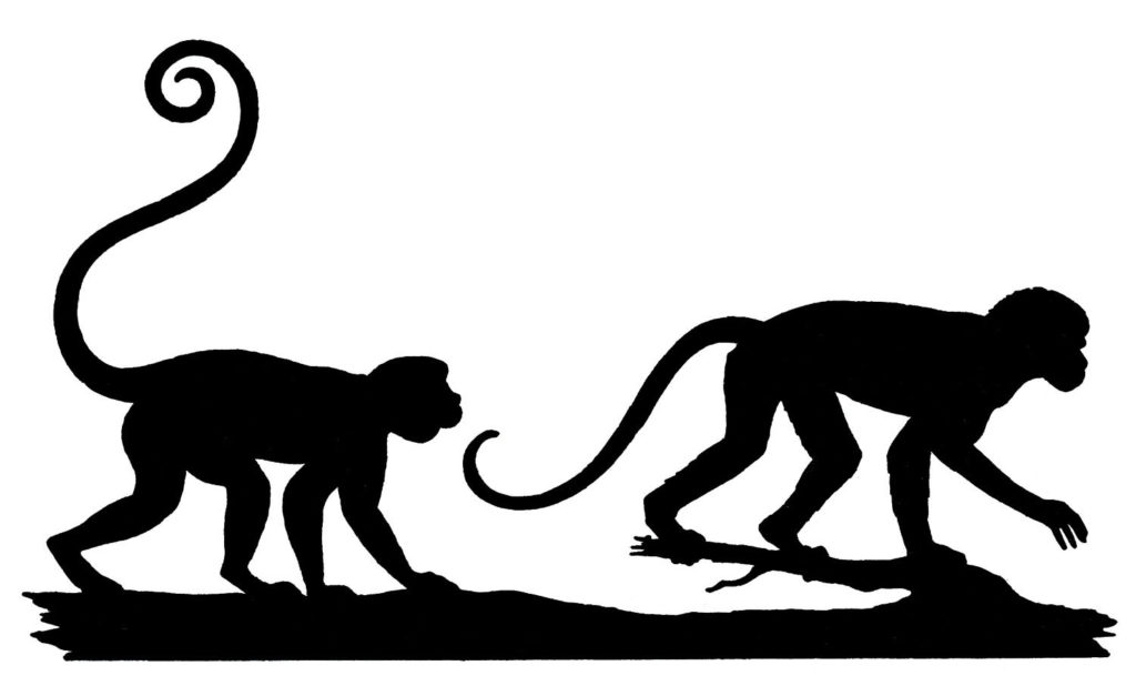 monkeys silhouettes clipart