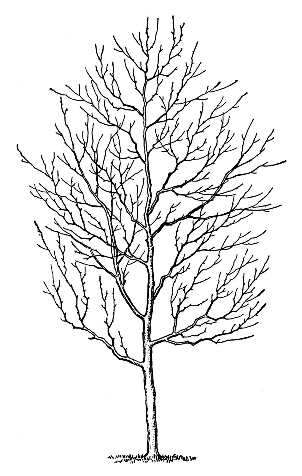 4 Winter Tree Images - Spooky! - The Graphics Fairy