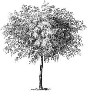 Tree Engraving Image