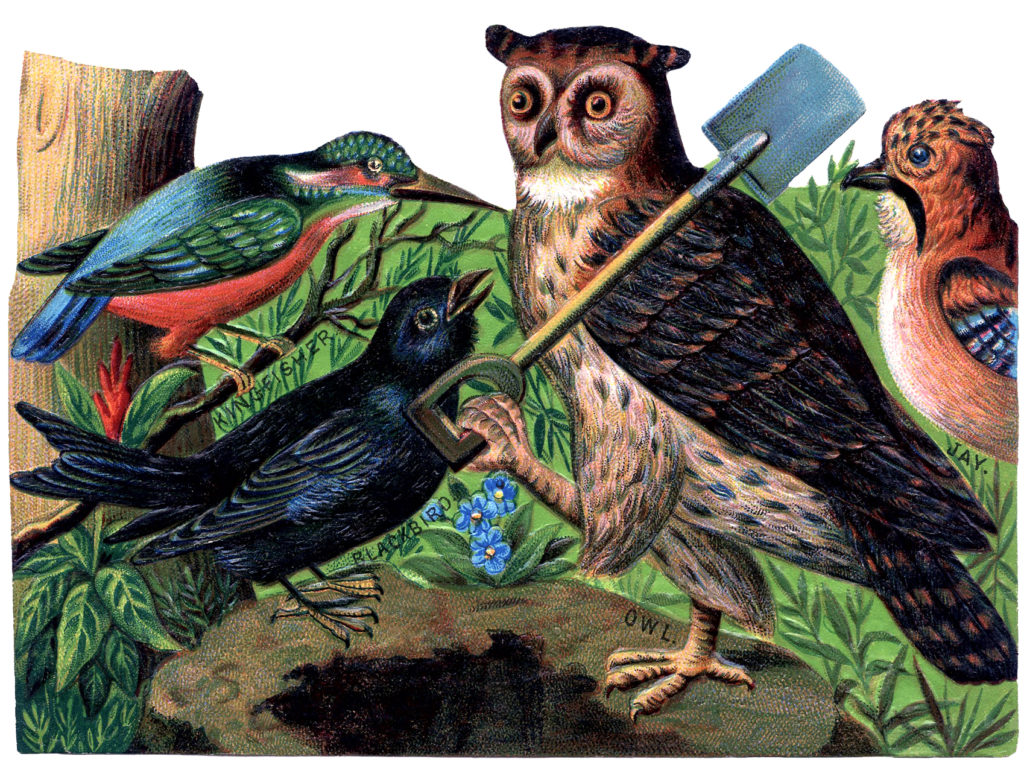 vintage owl birds working illustration