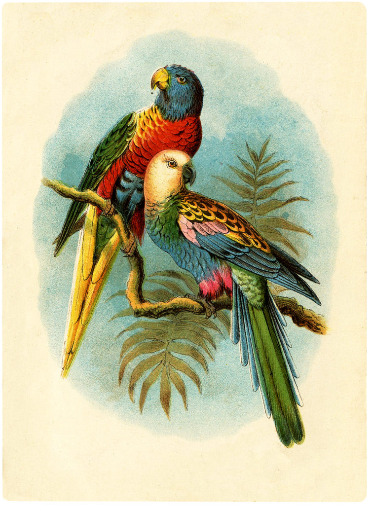 parrots colorful palm frond illustration