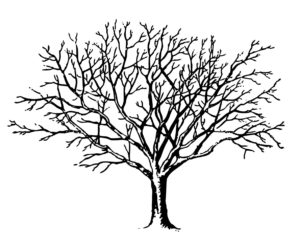 Winter Tree no Leaves Clipart