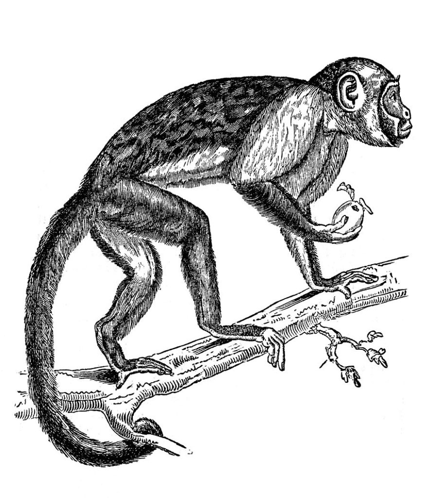 monkey climbing tree illustration